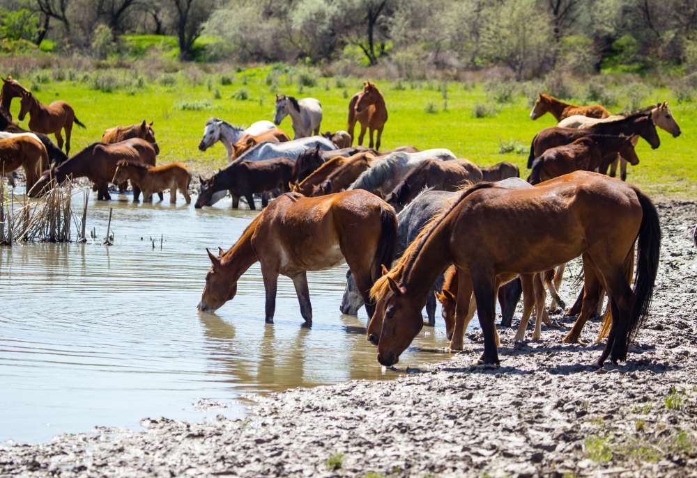 水を飲まない馬